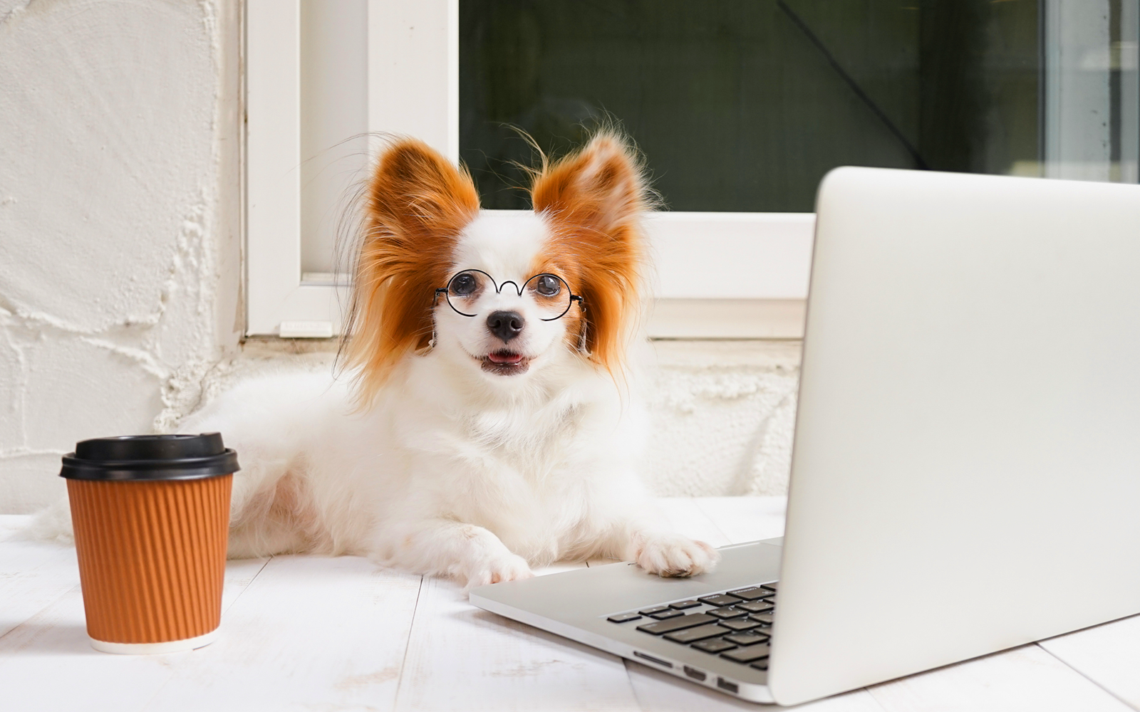 Dog wearing glasses working on laptop